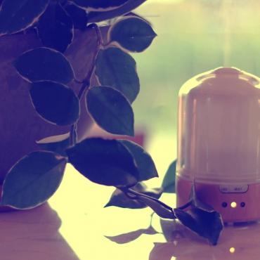 11月の香りと精油の価格について